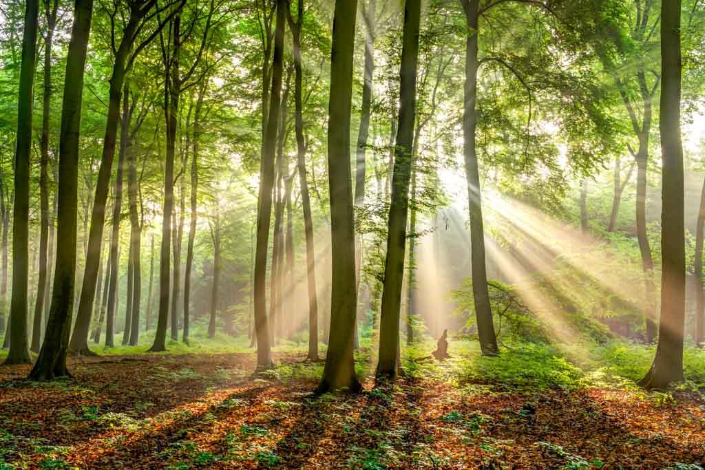 Lichtstralen in het bos
