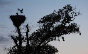Activiteit op het boomnest. - Fotograaf: Danny Slijfer