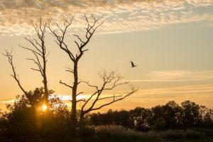 De ooievaar hoeft niet groot in beeld te zijn om het beeld krachtig te maken. - Fotograaf: Danny Slijfer