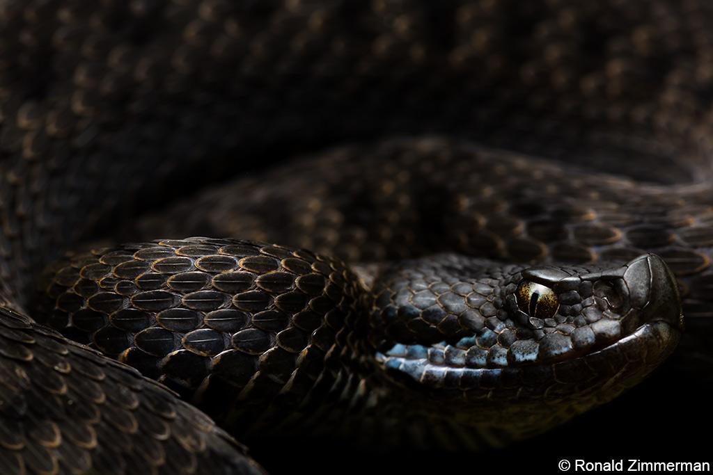 Is flitsfotografie bij wilde dieren ethisch verantwoord?