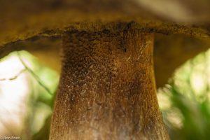 De overgang van steel naar hoed. - Fotograaf: Ron Poot