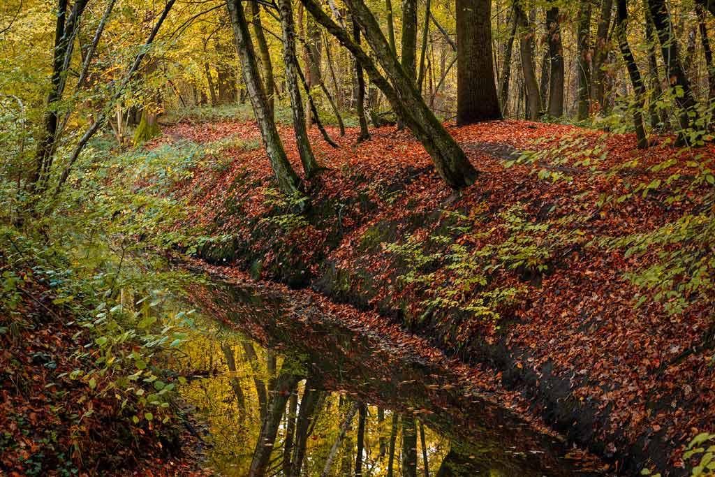 Hoe krijg je meer herfst in je foto's?