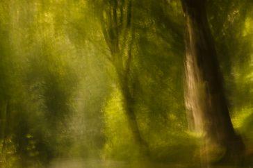 Creëer een sprookjesachtige sfeer in het bos met dubbele belichting