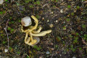 Een bizar gevormd groepje dat lijkt op een octopus. - Fotograaf: Ron Poot