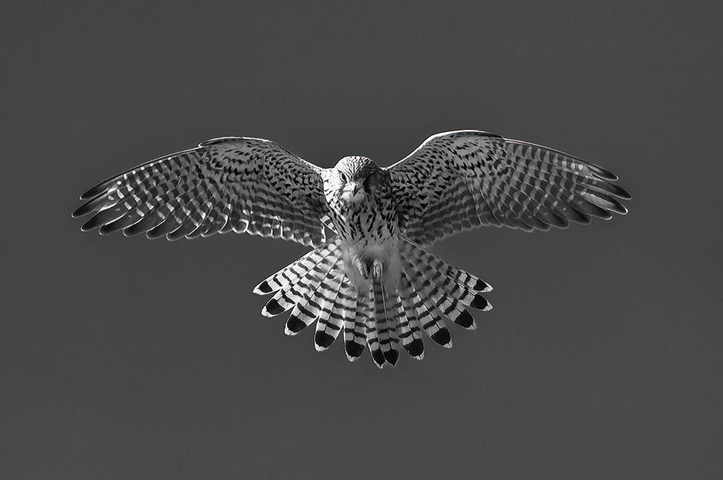 Tutorial zwartwit fotografie: Deel 2 In het veld