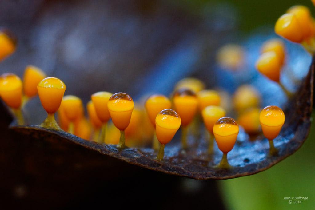 Een reis in de paddenstoelenwereld
