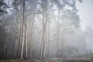 Een vroege ochtend met mist in het bos
