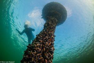 Weelderig begroeide boei met een snorkelaar aan de oppervlakte. - Fotograaf: Nico van Kappel
