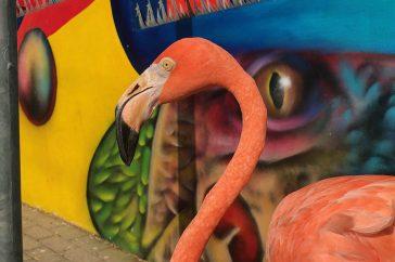 Flamingo Bob.