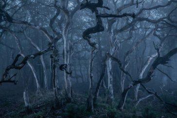 Spooky Trees Stroe
