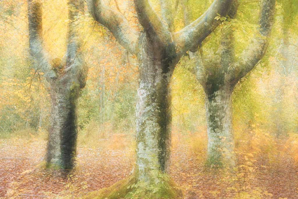 Creatieve bosfotografie – pointillisme
