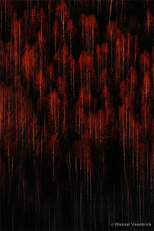 'Trees on fire' was een finalist in de NPOTY 2020.