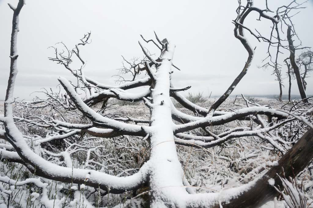 Hoe fotografeer je sneeuw?