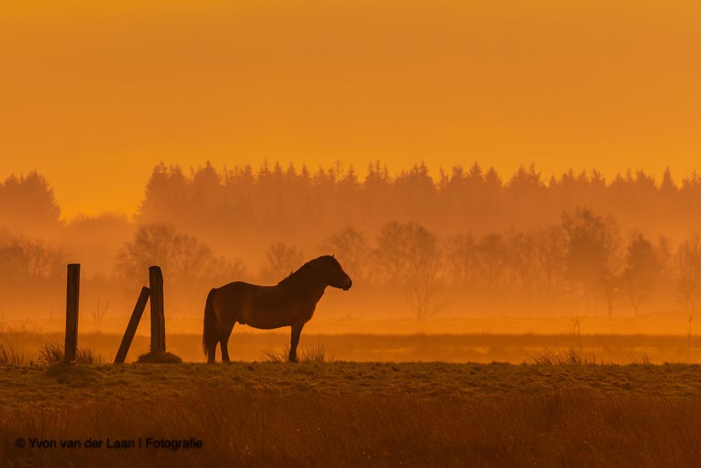 Natuurfotografie agenda januari – februari
