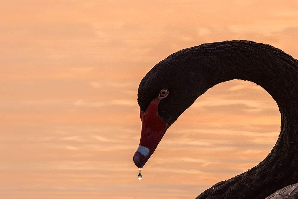 Gebieden fotograferen Natuurfotografie.nl:Wijnaerden