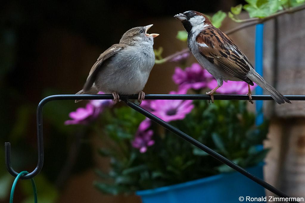 Meer natuurfotografie en biodiversiteit in de tuin