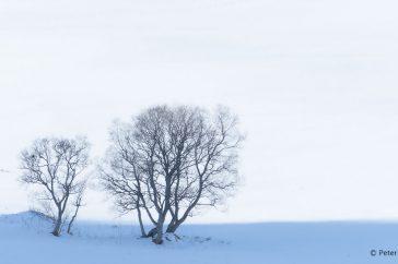 Bomen.