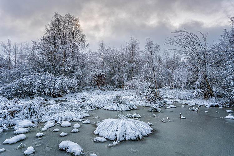 Winter in de Maasduinen