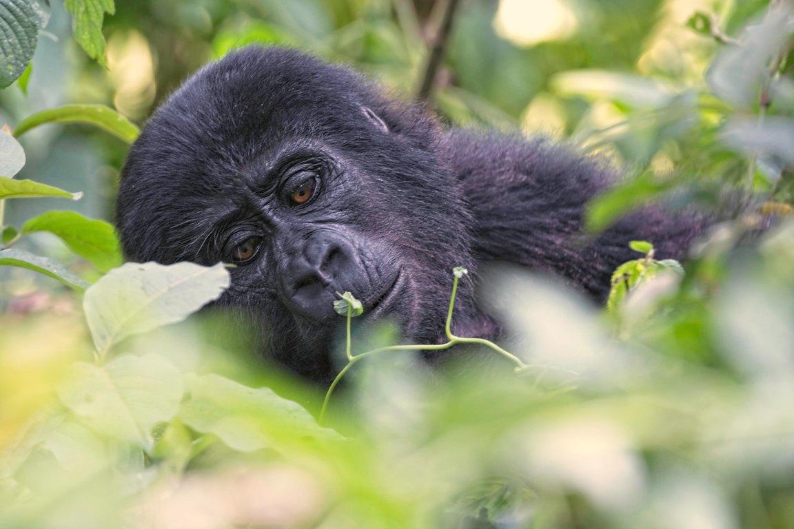 Dreamy (Oeganda)