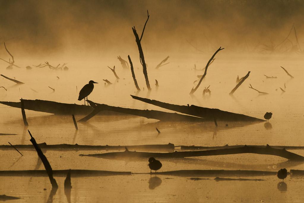 Eervolle vermelding in de categorie Vogels van de Groene Camera 2021.