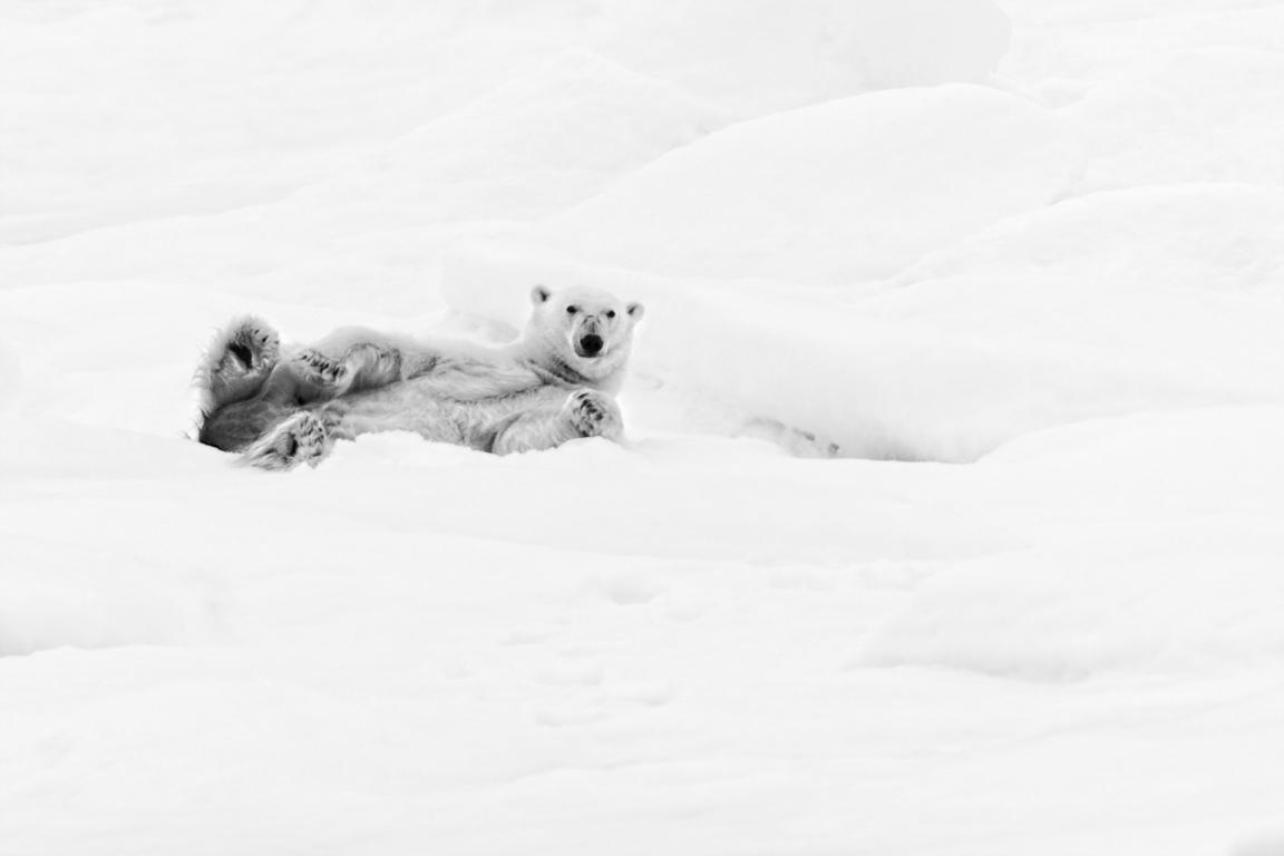 Just relax (Svalbard)