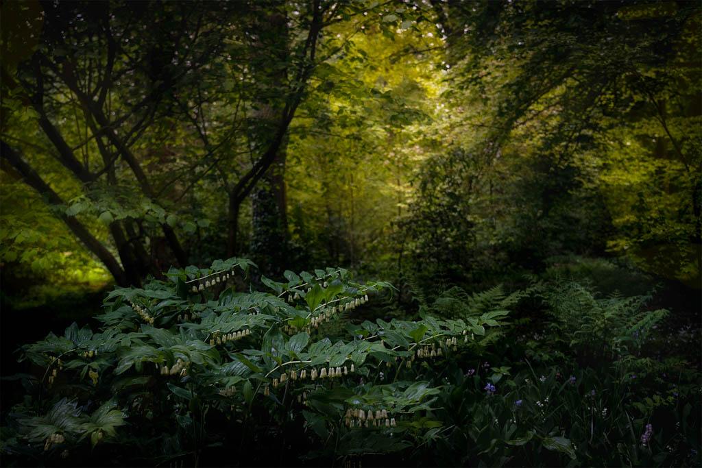 Runner-up in de categorie Planten en paddenstoelen van de Groene Camera 2021