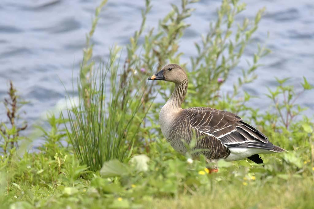 Gebieden fotograferen Natuurfotografie.nl:Eendragtspolder