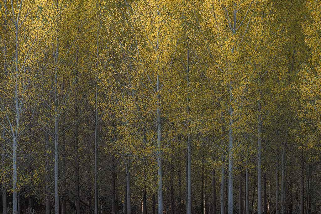 1001 manieren om bomen te fotograferen