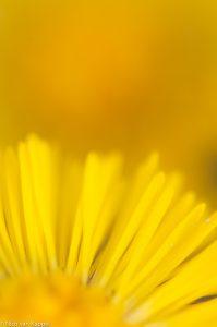 Detail van de bloem. - Fotograaf: Nico van Kappel