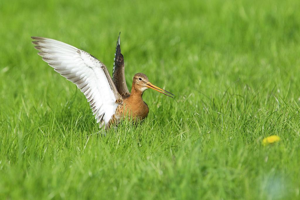 Vogelfotografie in het broedseizoen