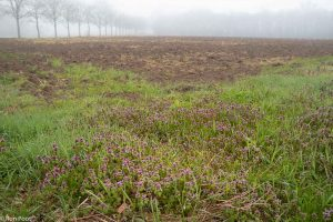 Akkerlandschap met in de voorgrond volop paarse dovenetel. - Fotograaf: Ron Poot