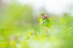 Een plantje dat boven het maaiveld steekt leent zich voor een geïsoleerde foto. - Fotograaf: Ron Poot
