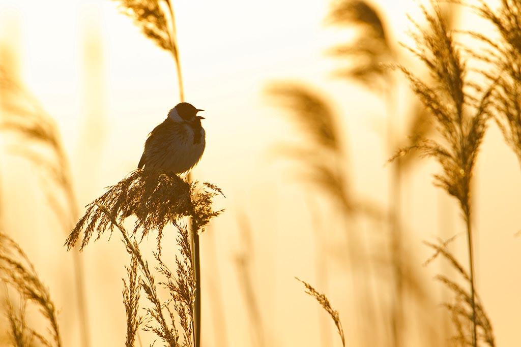 Zo fotografeer je vogels in het voorjaar