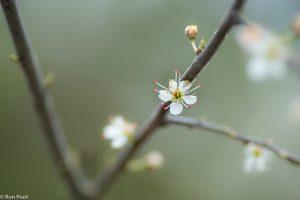 Een geïsoleerde bloem geeft een minimalistisch beeld. - Fotograaf: Ron Poot