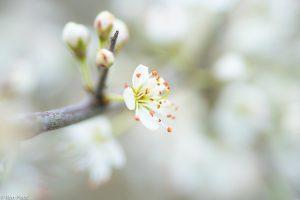 Met een open diafragma kun je een bloem isoleren en de achtergrond vaag houden. - Fotograaf: Ron Poot