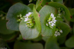 Twee plantjes, het lijkt een spiegelbeeld. - Fotograaf: Ron Poot