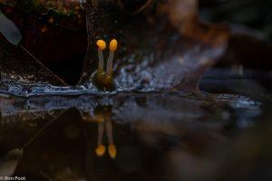 Vanaf laag standpunt kun je de spiegeling in het water goed in beeld krijgen. - Fotograaf: Ron Poot