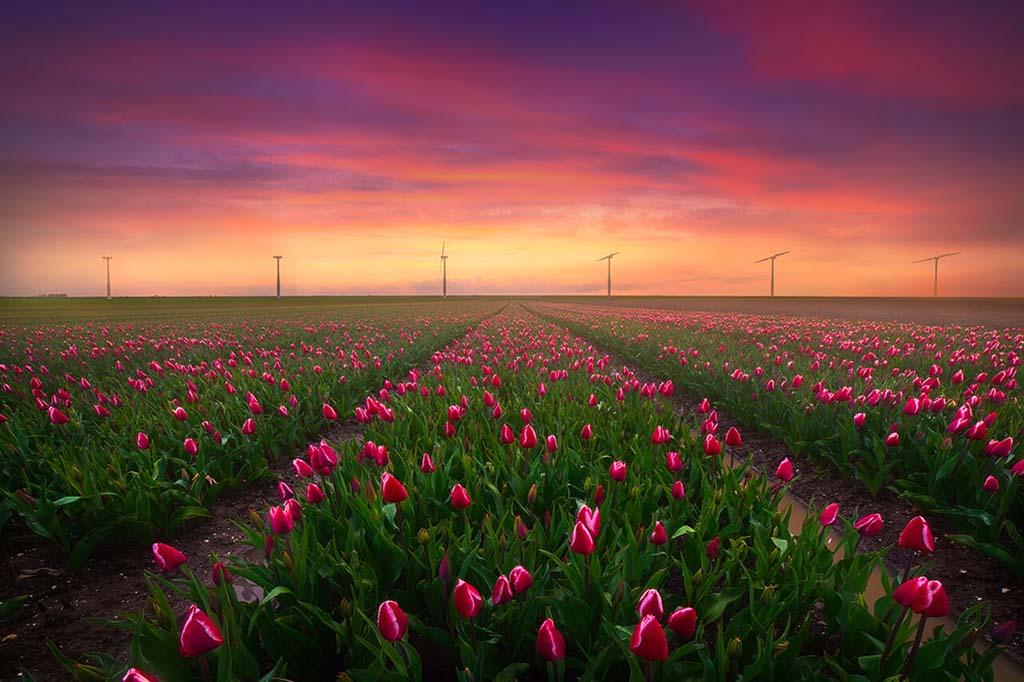 Lees alles over bloemenfotografie