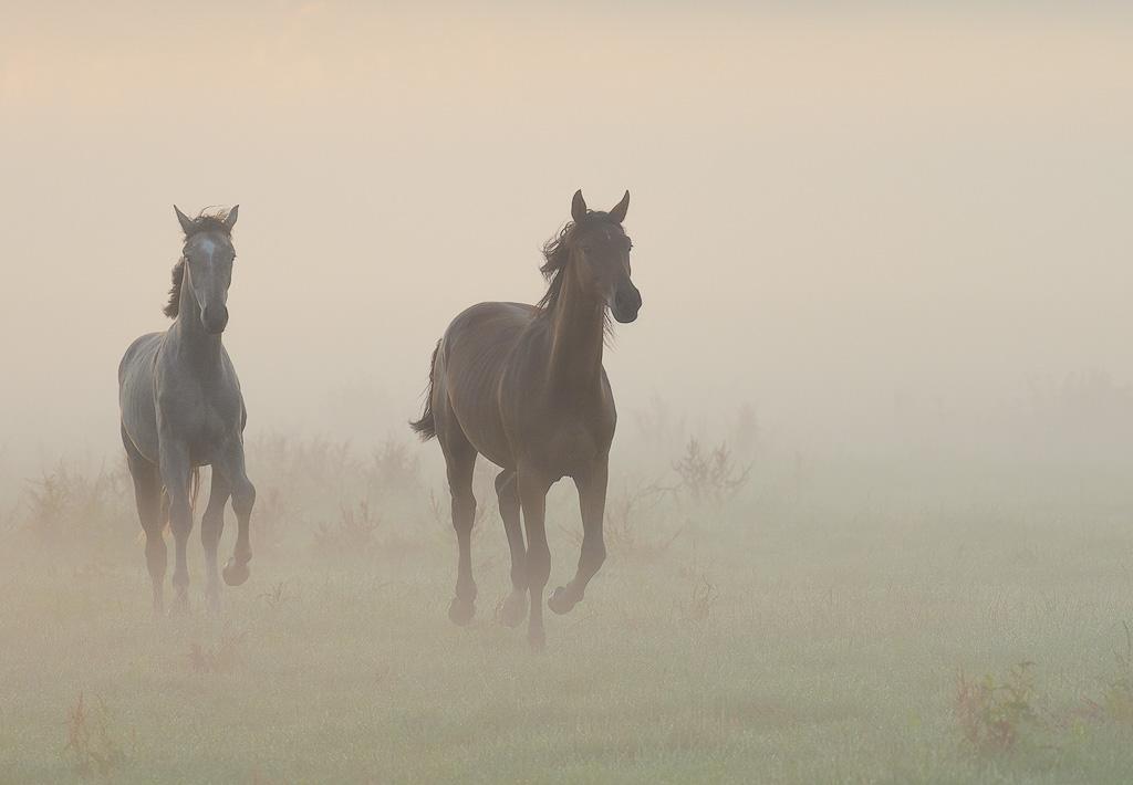 Paarden in de vroege ochtend