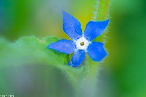Zelfs een afgevallen bloempje is het fotograferen waard.  - Fotograaf: Ron Poot