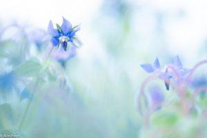 Door de vegetatie heenfotograferen levert een soft beeld op.  - Fotograaf: Ron Poot