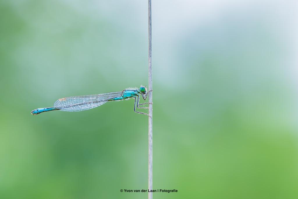 natuurfotografie agenda