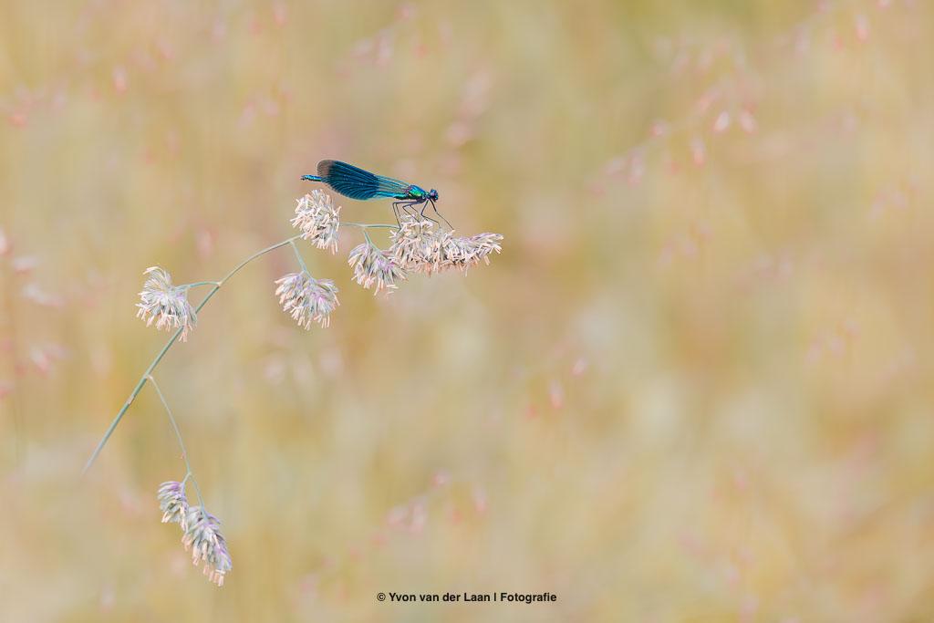 Natuurfotografie kalender