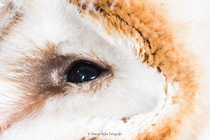Oog in oog... - Fotograaf: Danny Slijfer