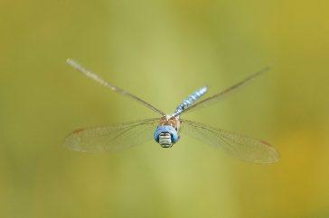 Vliegende libellen, een uitdaging..!