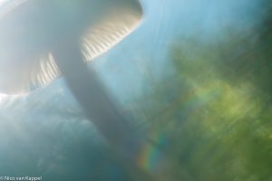 Geurende wasplaat, creatief benaderd. - Fotograaf: Nico van Kappel