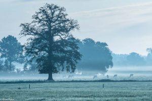 Zonder zon geeft mist een koele atmosfeer, het blauwe uurtje. - Fotograaf: Ron Poot