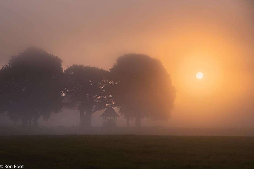 Zonlicht door de mist