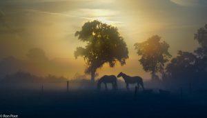 Dieren in het nevelige landschap geven net wat extra. - Fotograaf: Ron Poot