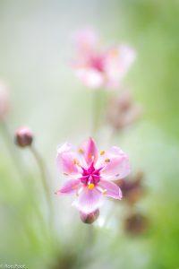 Compositie van twee bloemen, een scherpe en een vage. - Fotograaf: Ron Poot